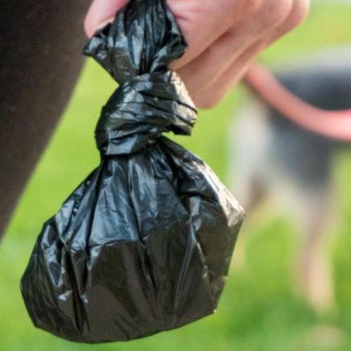 Can You Put Dog Poop In Someone Else's Wheelie Bin?