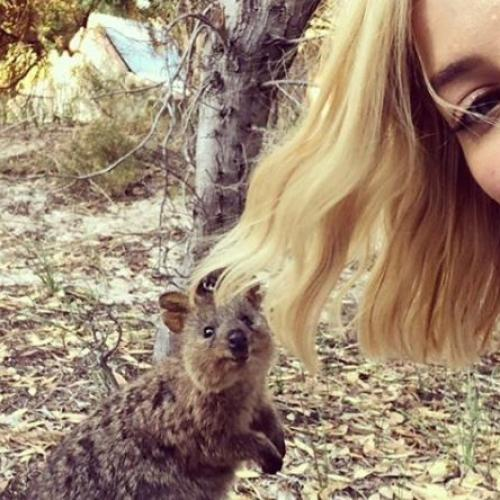 Quokka Selfies Boost Visitors To WA's Rottnest Island