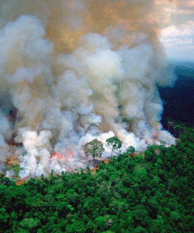 #PrayForAmazonia Has Gone Viral After Celebrities Bring Attention To Brazil Wildfires