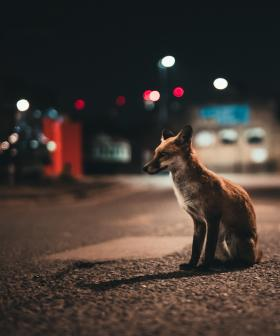 Animals Are Starting To Become Nocturnal To Avoid Humans