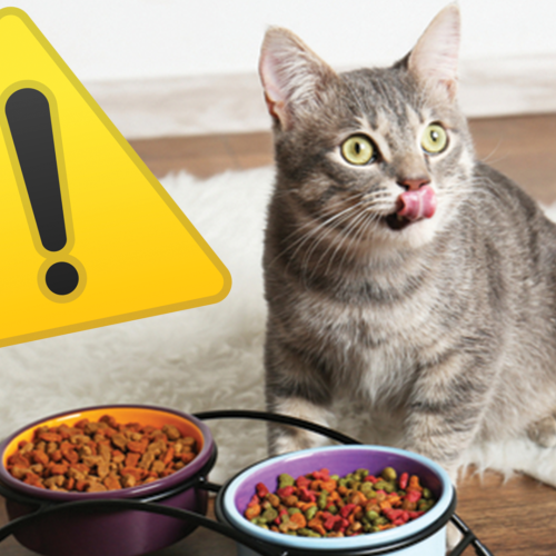 Cat Owners Warned Over The Diet That Could Lead To Pet's Blindness