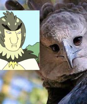 People Are Unsettled That This Eagle Looks Like Someone In A Bird Costume