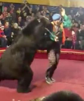 Circus Bear Mauls Handler In Front Of Horrified Audience