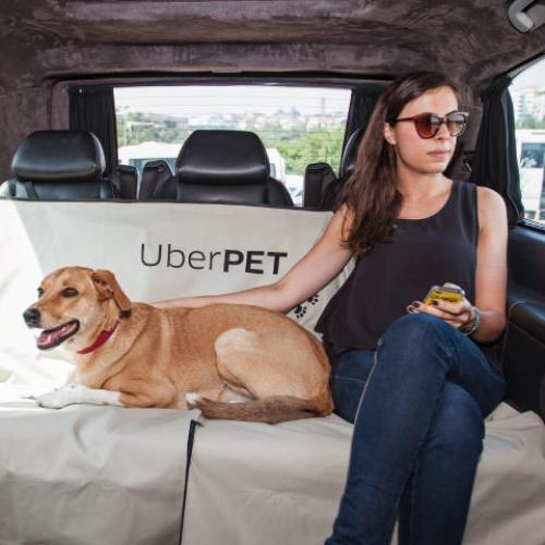 Uber Launches Pet-Friendly Service Just For Your Furry Mate