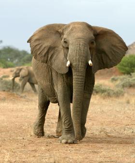 Elephant Kills Australian Man In Namibia