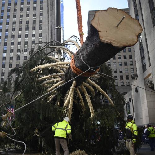 New York City's World-Famous Christmas Tree Goes Up