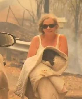 Lewis The Koala Bravely Rescued From NSW Bushfires Dies