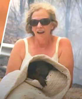 Heroic Woman Saves Burnt And Screaming Koala Using The Shirt Off Her Own  Back