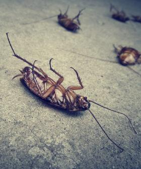 This Zoo Is Letting You Name A Cockroach After Your Ex And Feed It To An Animal For V-Day
