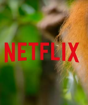 Netflix Has Just Put A Bunch Of Documentaries Up On YouTube For Free