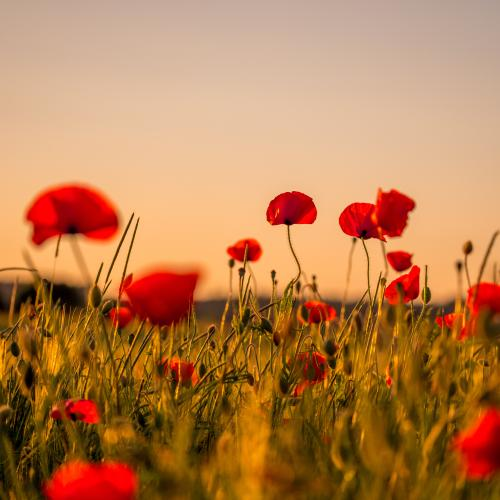 Join Us In Commemorating Our ANZACs With The Driveway Dawn Service