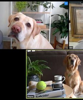A Zoom Meeting Full Of Puppies Is Happening And You Are Invited!
