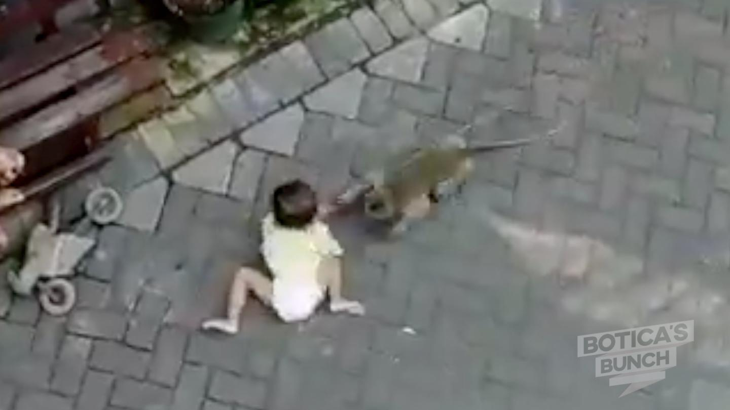 Amazing footage of a monkey on a motorbike trying to steal a child!