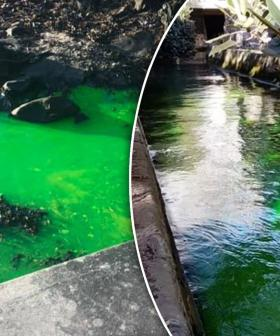 'It Needs To Be Checked': Mysterious Fluorescent Green Water Spews Out Of Drain