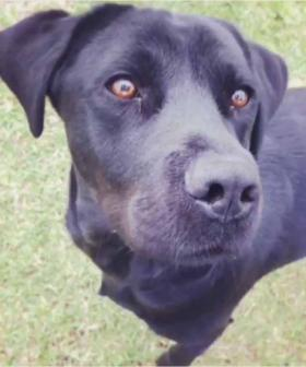 WA Police Canine Team Say Goodbye To 'Much Loved Mate'