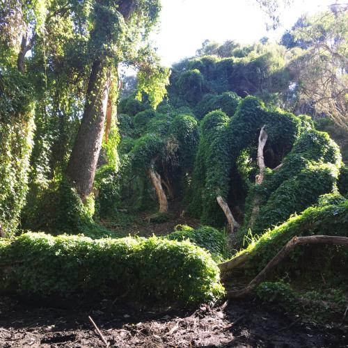 Perth's 'Secret Garden' Closes Over School Holidays For Being Too Popular
