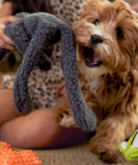Big W Has Launched A Brand New Pet Range Because Your Fur Baby Deserves To Be Spoiled Too