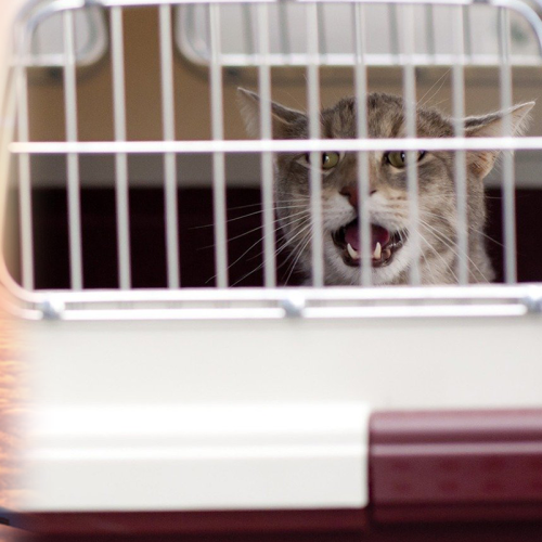 Cats Send Flight Into Chaos After Escaping Carriers, Passengers Scramble To Find Them