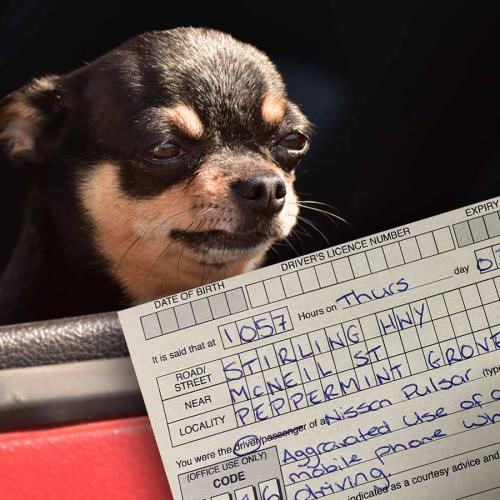 Perth Motorist Cops $1000 Fine For Taking Pics Of Dog While Driving