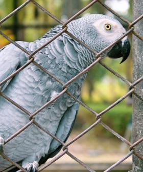 Foul-Mouthed Parrots Moved Away From Wildlife Park Visitors For Swearing Too Much