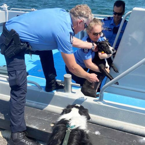 Lucky Perth Dog Plucked Out Of Ocean 'Mid-Rotto Channel Swim'
