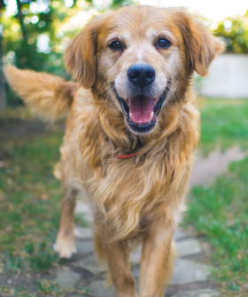 It Turns Out A Dog Year Isn't Equivalent To Seven Years After All