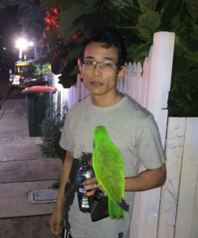 'Anton! Anton!': Parrot Saves Owner From House Fire In Brisbane