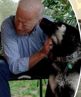 Joe Biden's Dog 'Major' Set To Make History When He Moves Into The White House