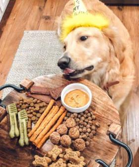 We're Now Making Charcuterie Boards For Dogs Called 'Barkuterie'