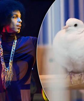 Prince's Beloved White Dove Divinity Dies At 28