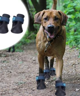 OK, So, Kmart Are Now Selling Gumboots For Your Pets