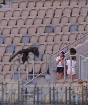 We've All Wondered If Auzzie The Eagle Would Ever Go Rogue... And Sunday Was The Day