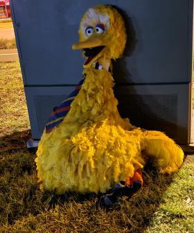 Big Bird Has Been RETURNED With A Note Left In His Beak