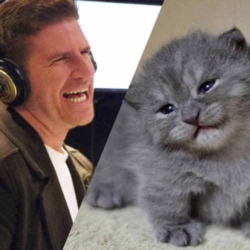 Cat chat with Sam Mac.