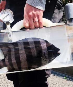 The Katsugyo Bag Means You Can Now Take Your Fish For A Walk