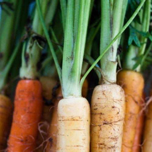 Apparently We've Been Using Carrot Tops Wrong This Whole Time