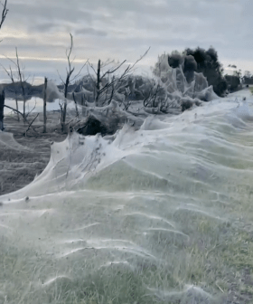 Horror Show of Spiders Cover Aussie Town With Cobwebs After Flooding
