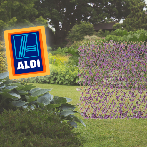 Green Ivy? Hold My Beer, Aldi's Now Selling A PURPLE Garden Trellis