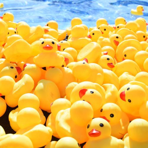 Thousands Of Yellow Ducks To Be Released At Hillarys For The 2021 Duck Derby!