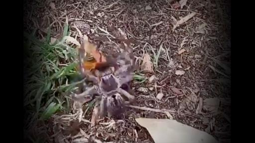 Tell all your spider loving friends about this one!