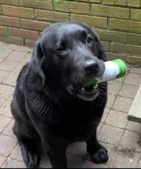 Woman Teaches Her Dog To Fetch Her A Drink When She Says 'It's Gin O' Clock!'