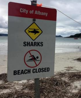 WA Man Allegedly Removed Tag From Shark, Used It To Set Off Several Hoax Shark Alarms